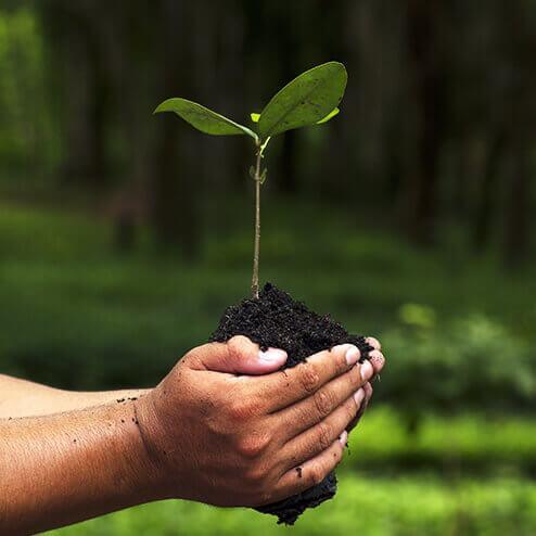 Imagem de uma mão segurando uma planta   JCP - Soluções Ambientais