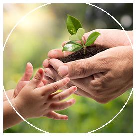 Imagem de uma mão segurando uma planta   JCP Soluções Ambientais Campinas
